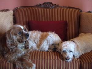 Three amigos - Diego, Ernie, and Bert