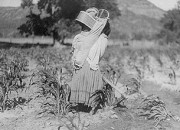 The first genetic engineers cultivated a grass called Teosinte - in the region now known as El Salvador. Credit: Library of Congress, LC-USZ62-46945